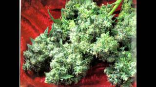 Da Brat Feat. Krayzie Bone - Let's All Get High (Uncensored)