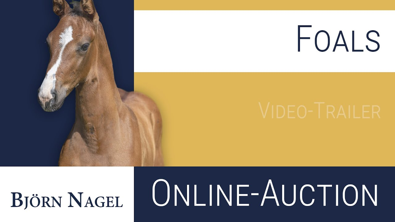 1th Björn Nagel - Foals Online-Auction