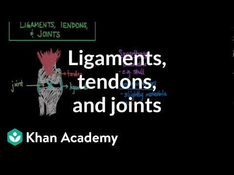Ligaments, tendons, and joints (video)   Khan Academy