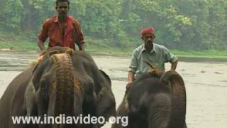 Elephant activity at Kodanad elephant training centre