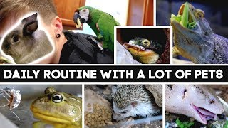 Daily Pet Care Routine! (I have a lot of pets)