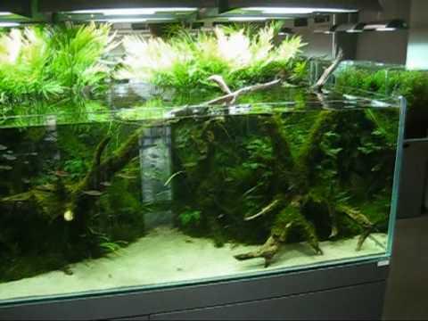 ADA Aqua Design Amano Nature Aquarium Gallery 尚天野のADAギャラリー 新潟県