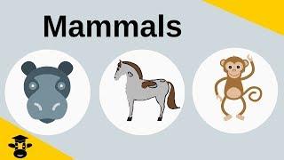 Unique Characteristics Of Mammals
