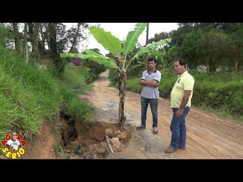 Moradores plantam bananeira na  Avenida 31 de Março no Bairro do João Leite