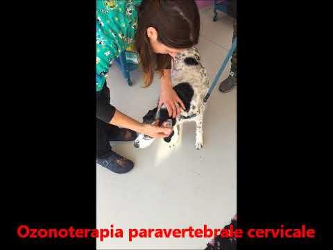 Farmaci per cani con articolazioni dolorose