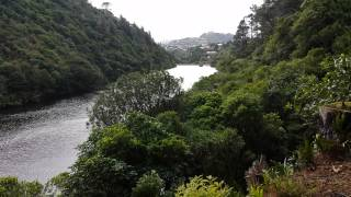 preview picture of video 'Zealandia, Looking down on the Lower Karori Dam.'