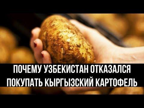 Узбекистан не стал покупать кыргызский картофель из-за его стоимости.