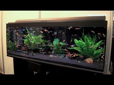 Aquarium ideas from InterZoo 2014 (pt.25) – Saigon Aquarium
