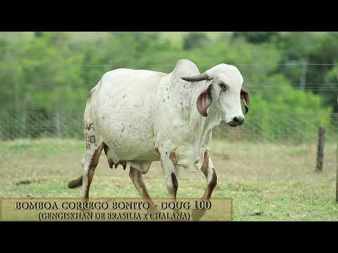 Bomboa Córrego Bonito - DOUG 100