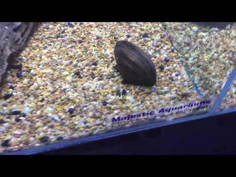 Anumang mga senyales ng mga worm sa isang bata 4 na taon