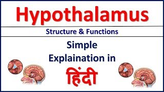 Hypothalamus Structure and Function simple explaination in Hindi | Bhushan Science