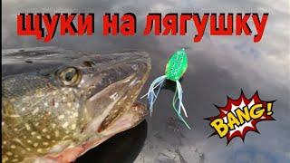Как сома ловить на лягушку щуку