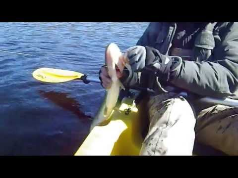 Cape Cod Pond Fishing 4-21-2013