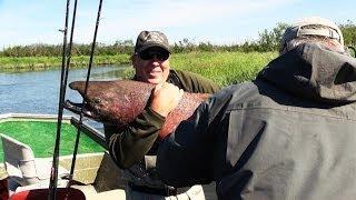 Trophy King Salmon Caught in Alaska!!