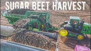 SUGAR BEET HARVEST! 2017 Amity Harvester, John Deere 9630