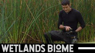 Ecosystem - Wetlands