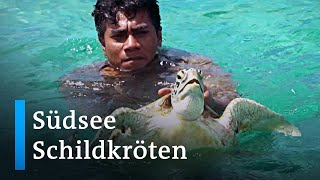 Salomonen: Naturschützerinnen retten Meeresschildkröten   Global Ideas