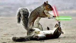JEDI CHIPMUNKS LIGHTSABER BATTLE