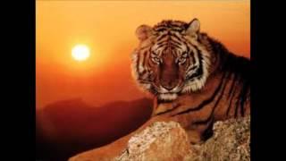 cancion ojo del tigre