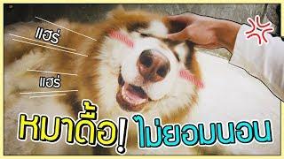 โคตรดื้อ!! หมายักษ์ไม่ยอมนอน หมาน้อยก็เช่นกัน! | ก็ผมมีลูกเป็นหมา EP.59