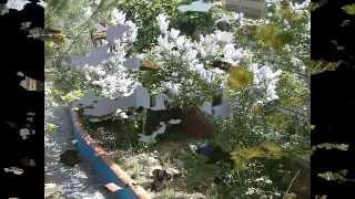 Video del alojamiento El Cercado de Arriba
