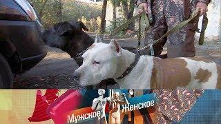 Мужское / Женское - Бешеные псы. Выпуск от26.10.2017