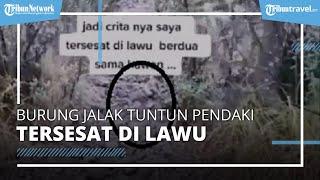 Pendaki Gunung Lawu Tersesat Berhasil di Selamat Usai Dituntun Burung Jalak, Berikut Kata Relawan