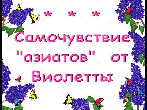 """ОРХИДЕИ """"азиаты"""" от Виолетты спустя 3 месяца.С днем рождения,ОЛЬГА!!!"""