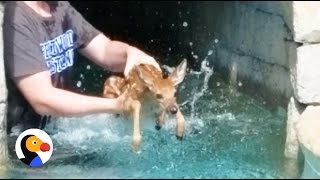 Download Youtube: Baby Deer Crying Rescued TWICE from Pool | The Dodo