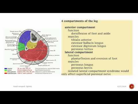 Leg Compartment Syndrome Trauma Orthobullets
