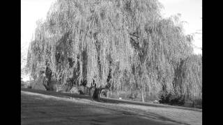 Willow Weep For Me - Cleo Laine (HD)