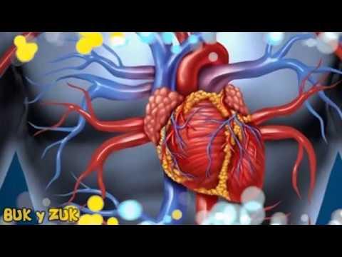 Hipertensión liebres