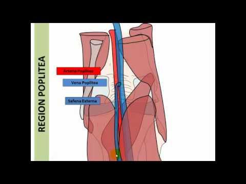 Dolore cintura addominale e ritorno negli uomini