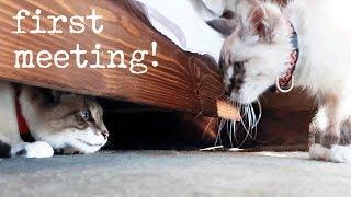 Introducing My Cat To A Kitten (Milquetoast Meets Pipsqueak)