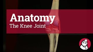 Anatomy: The Knee Joint