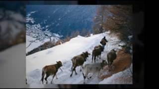 preview picture of video 'Val di Pejo - i mestieri'
