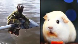animales  animales relajantes