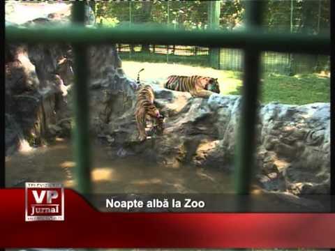 Noapte albă la Zoo