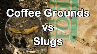 Slug Wars Trilogy pt. 1 - Coffee Grounds vs Slugs