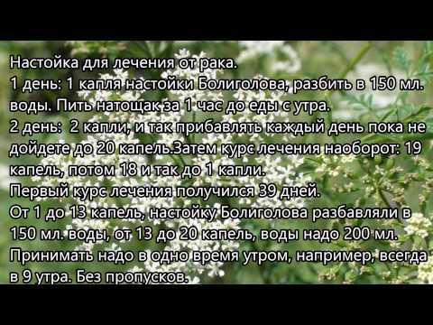 Берёзовые листья от простатита