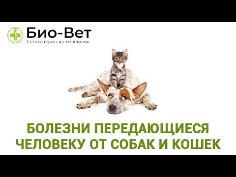 Болезни передающиеся человеку от собак и кошек. Ветеринарная клиника Био-Вет.