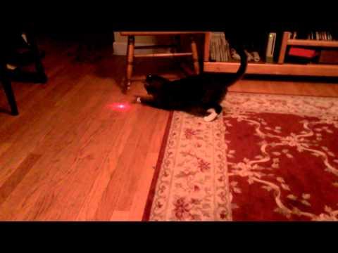 主人好壞! 貓星人頭上綁鐳射燈 追得小貓快抓狂