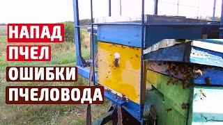 Работы на пасеке Подкормка пчел осенью Воровство пчел Утепление в улье