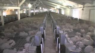 Изюмские кролики