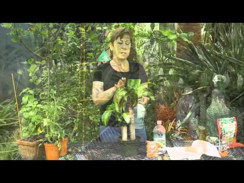 Video Natural Remedies for Houseplant Diseases : Garden Space