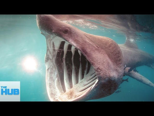 The Most Rare Shark Species Hidden in The Ocean