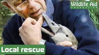 Simon saves stranded swan