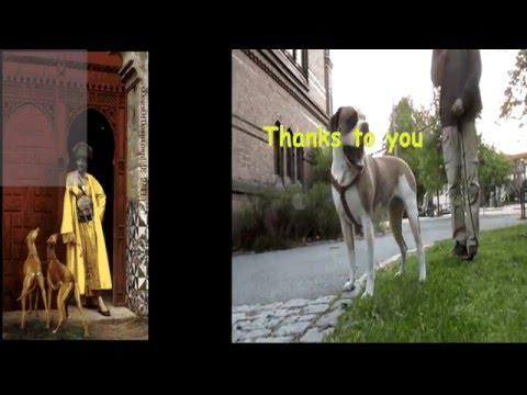 Sci-fi AGARI The Space Dog VS DAILYMOTION PIRATES - 18+ XXX - DogsofDowntownUAE  (الحب الحيوان)