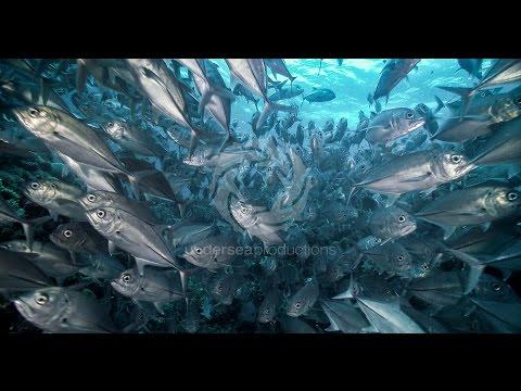 נפלאות העולם התת ימי באיכות 4K
