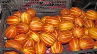Вьетнамская дыня - нужны семена